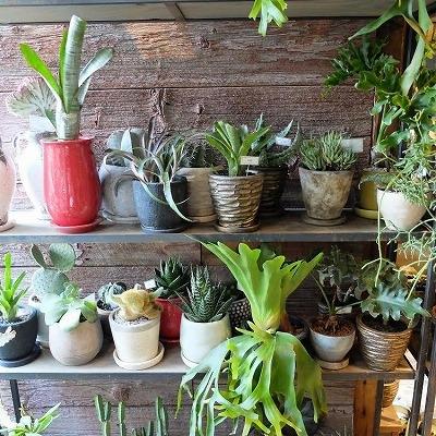 観葉植物shop